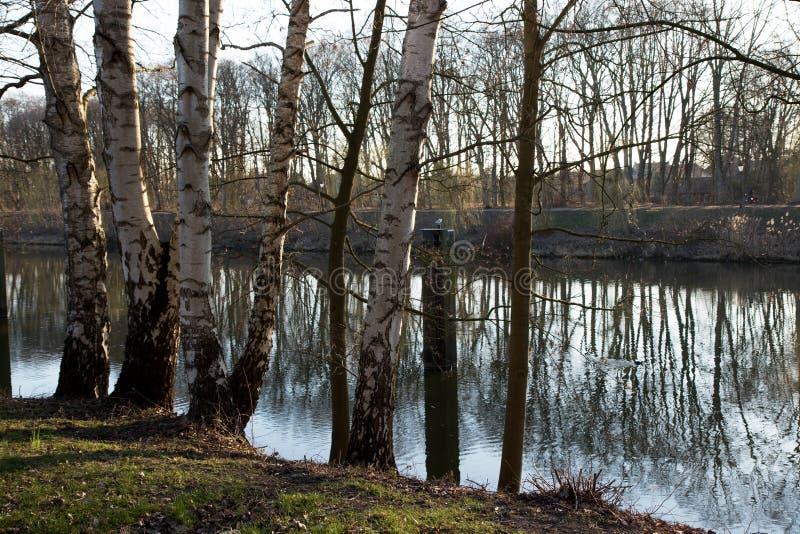 在河的看法和自然风景一晚夏天在meppen emsland德国 库存图片