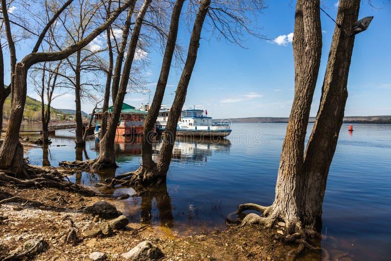 在河的被充斥的树 免版税图库摄影