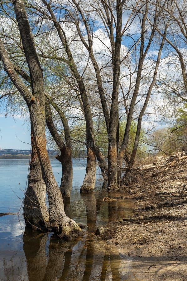 在河的被充斥的树 免版税库存照片