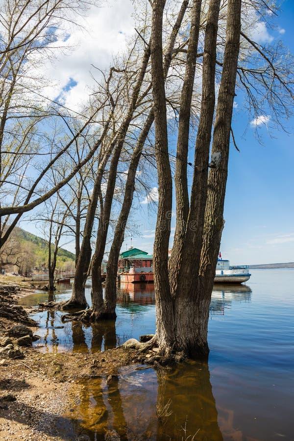 在河的被充斥的树 库存图片
