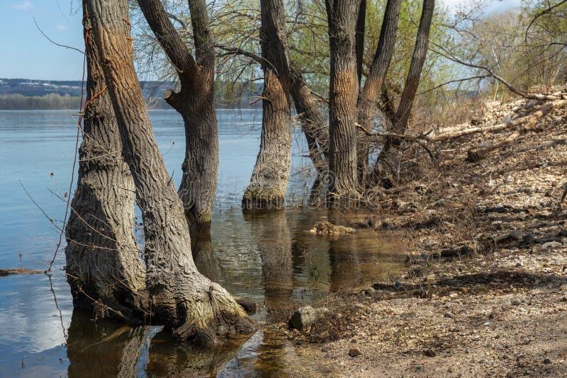 在河的被充斥的树 库存照片