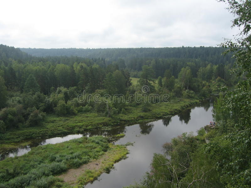 在河的豪华的森林的中洪泛区 图库摄影