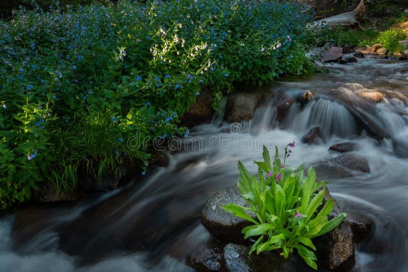 在河的野花 库存照片