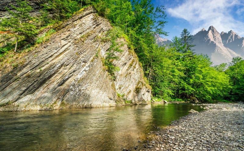 在河附近的树山的 免版税库存图片