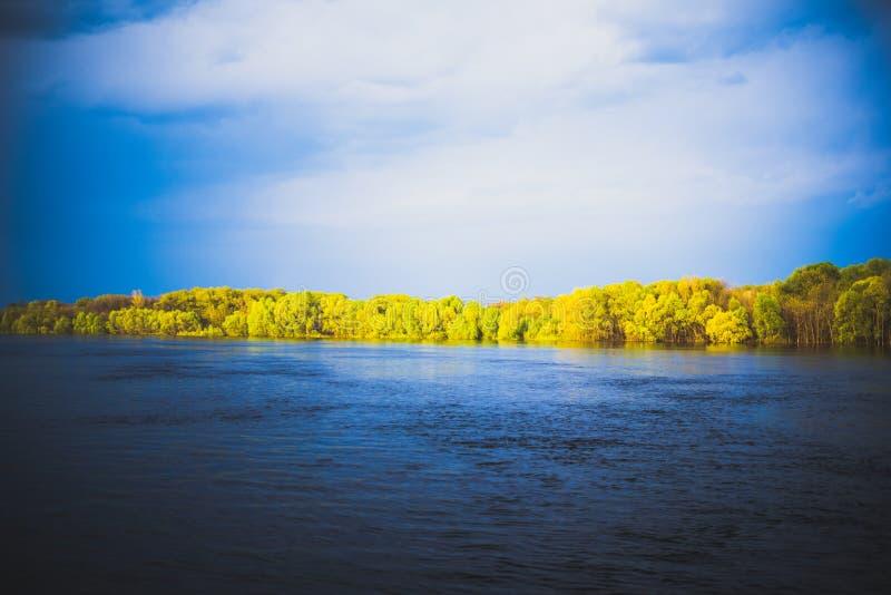 在河附近的森林 免版税图库摄影