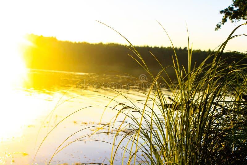 在河附近的草在阳光下 免版税库存图片