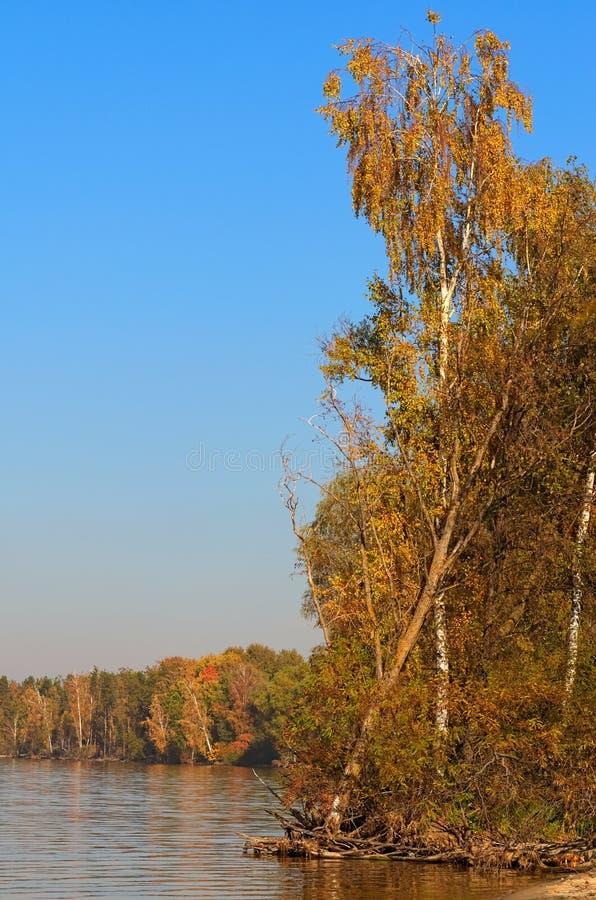 在河附近的高树晴朗的秋天天 风景和自然的概念 库存照片