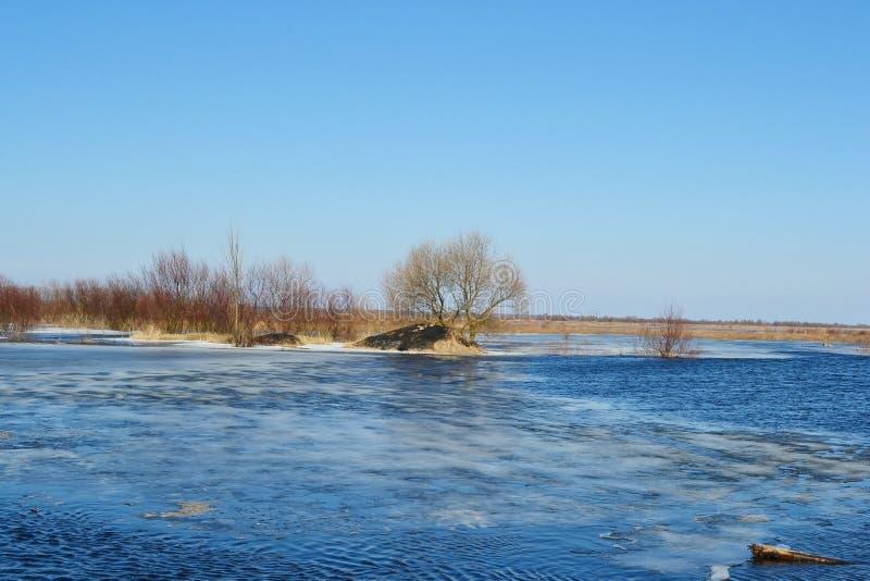 在河Pripyat的早期的春天 图库摄影