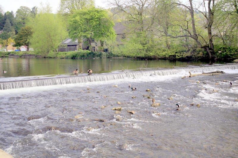 在河Y形支架, Bakewell,德贝郡的测流堰。 免版税库存照片