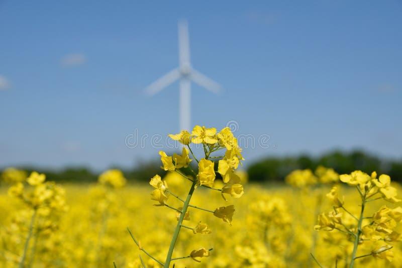 在油菜籽植物的领域的风轮机 免版税库存照片