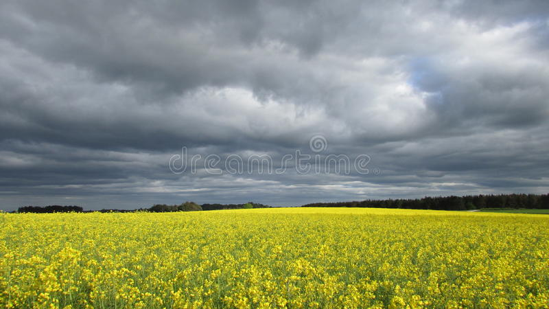 在油菜籽的云彩 图库摄影