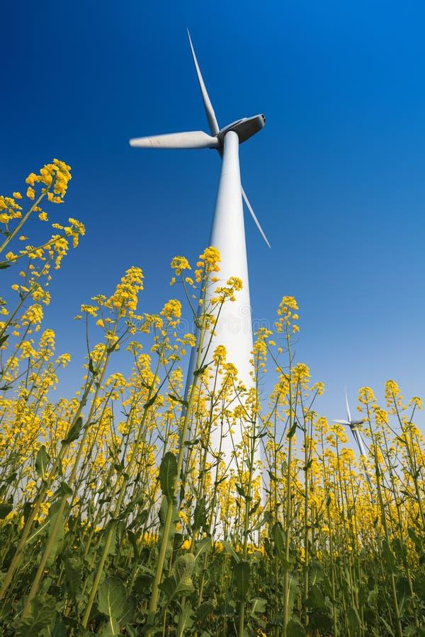 在油菜籽领域的风轮机 库存照片