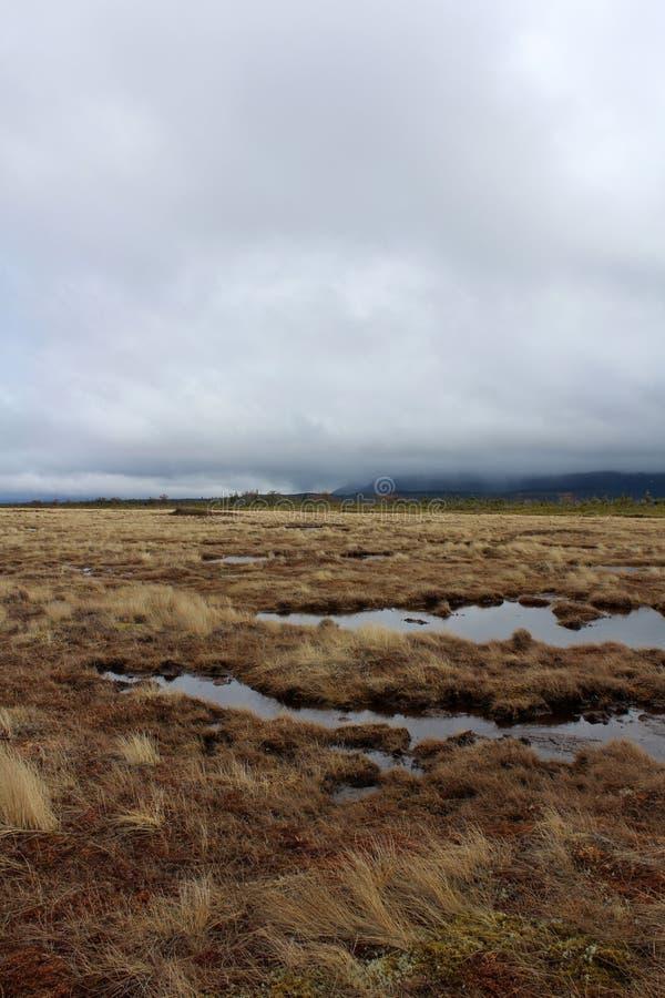 在沼泽地上的阴暗天空纽芬兰的 库存图片