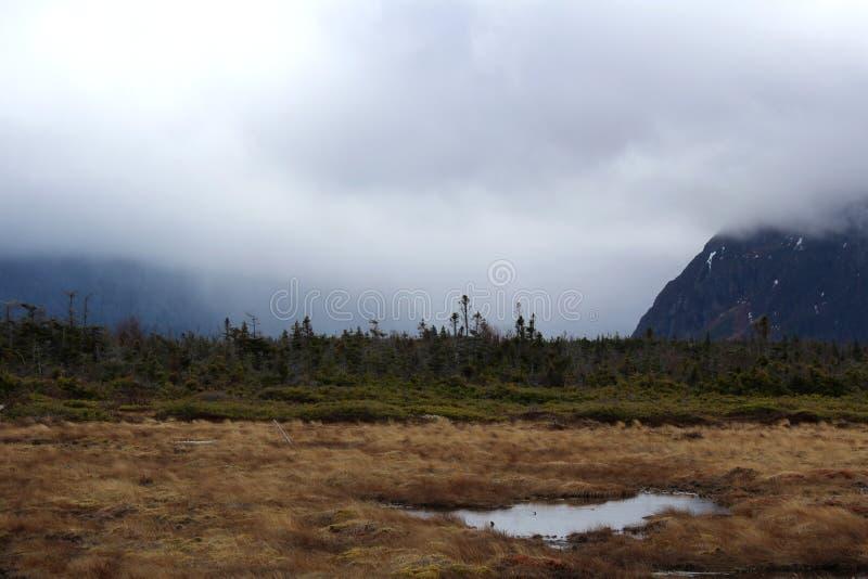 在沼泽地的雾纽芬兰的 免版税库存照片