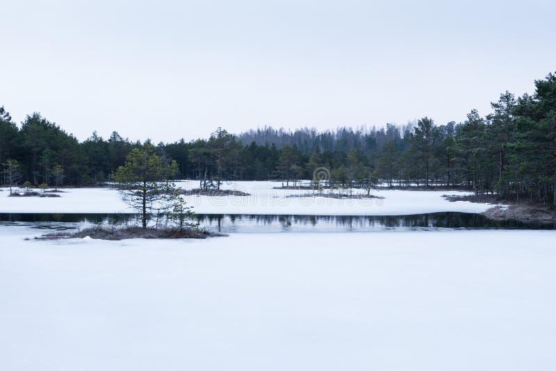 在沼泽的冬天 冰冷的冷的沼泽 冷淡的地面 Swamp湖和自然 结冰温度停泊 斯诺伊市分 免版税库存图片