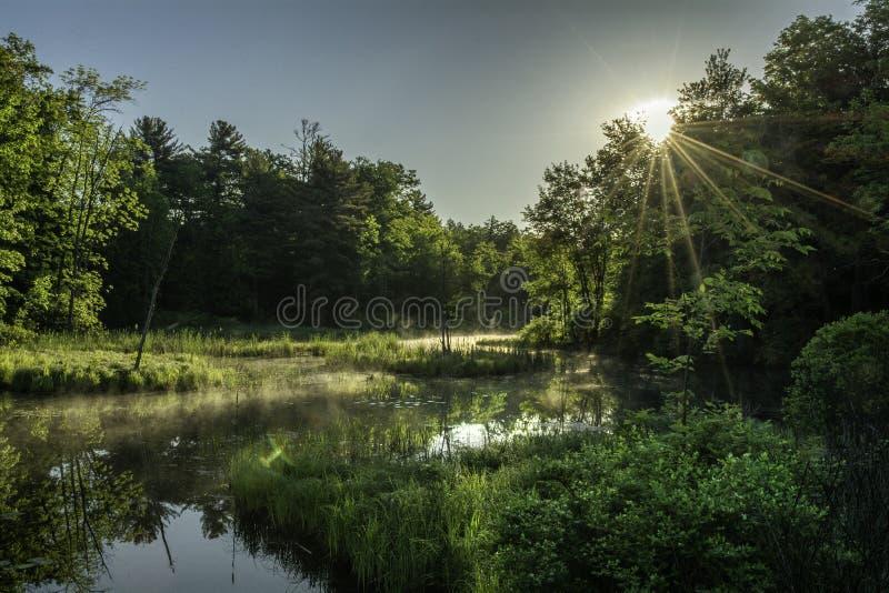 在沼泽的日出在阿地伦达山脉纽约 免版税图库摄影