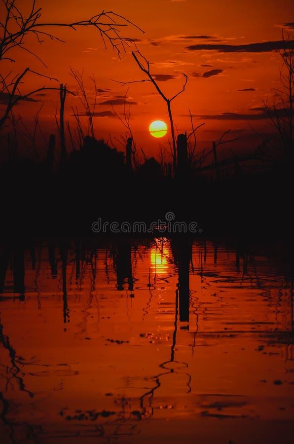 在沼泽的日落 免版税库存照片