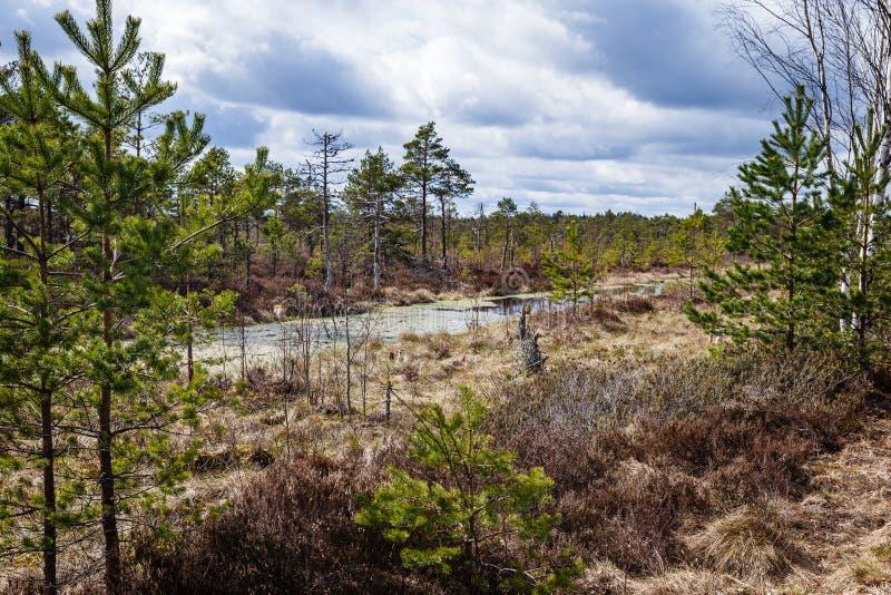 在沼泽的早期的春天 免版税库存照片