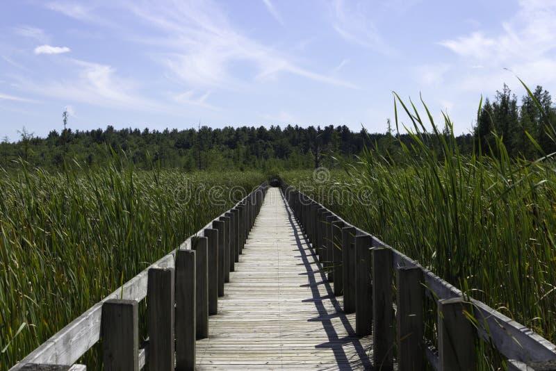在沼泽的木板走道 库存照片