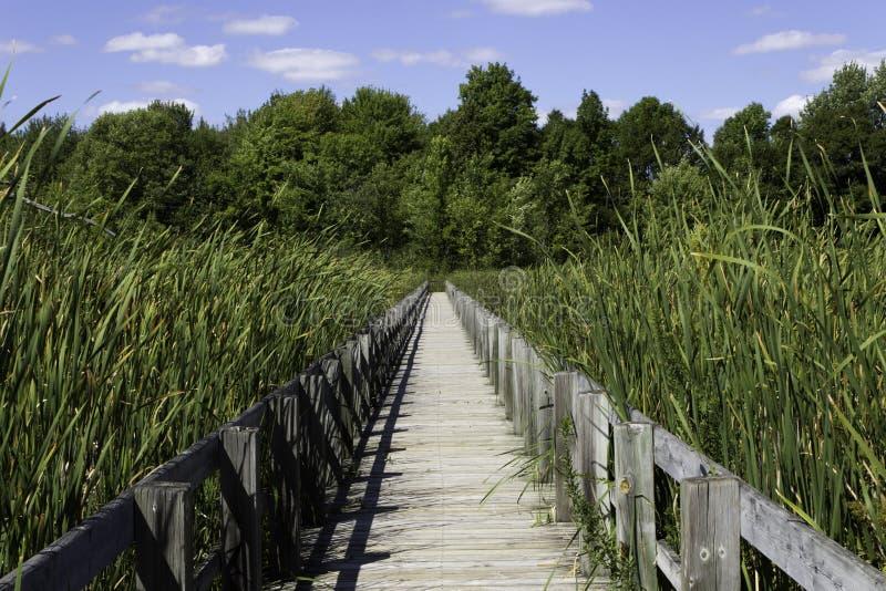 在沼泽的木板走道 免版税库存照片