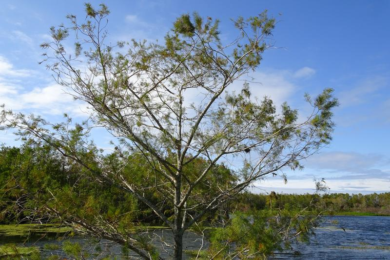 在沼泽的树 免版税库存照片