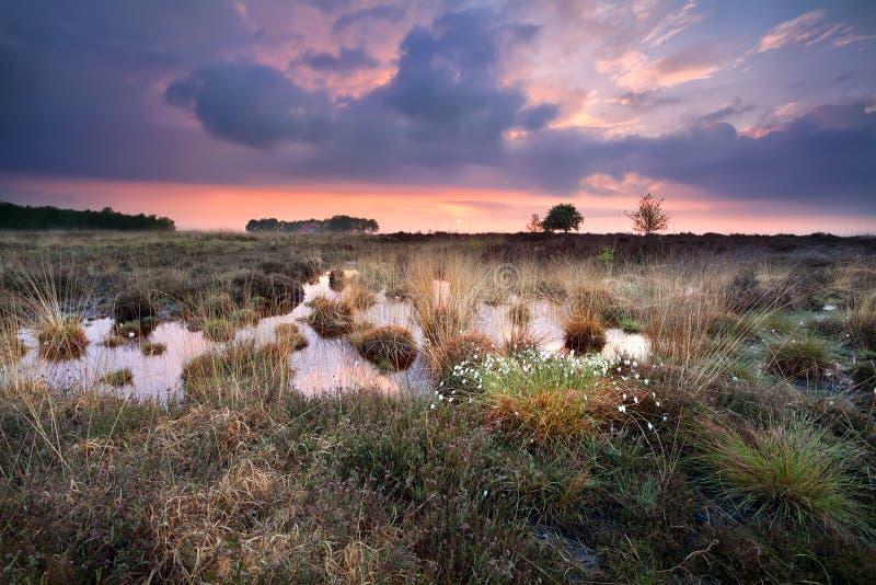 在沼泽的温暖的沈默日落在Fochteloerveen 免版税图库摄影