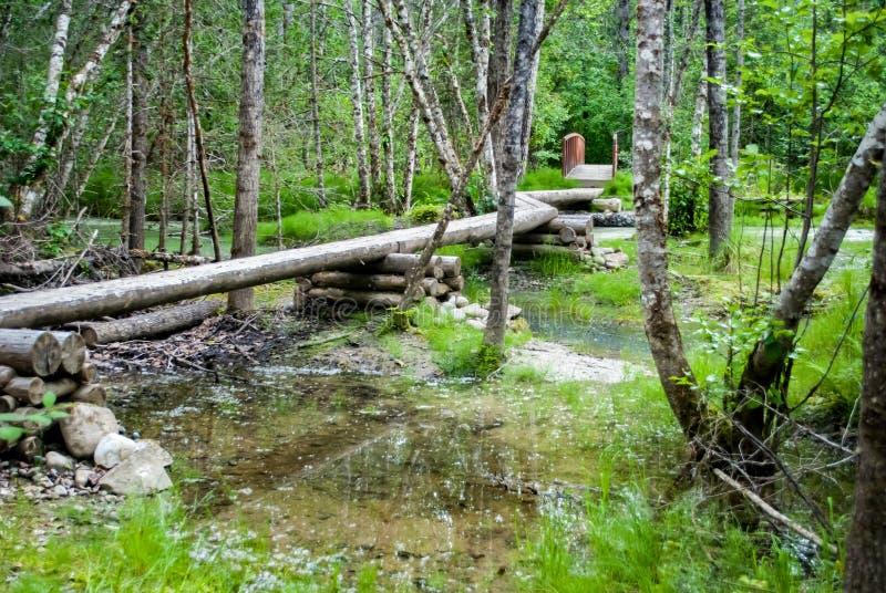 在沼泽的足迹的木板走道 库存照片