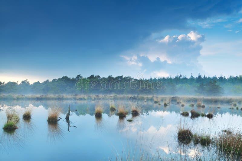 在沼泽的雾由森林 免版税库存图片
