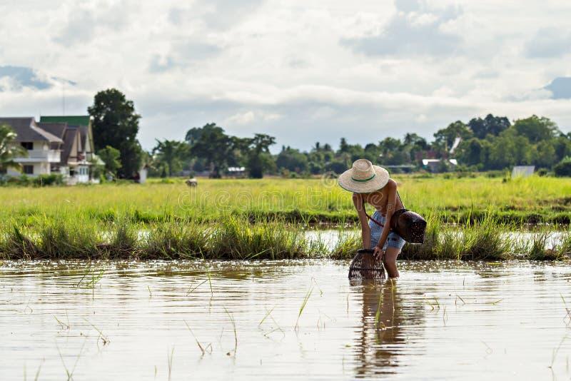 在沼泽的年轻农业学家渔 图库摄影