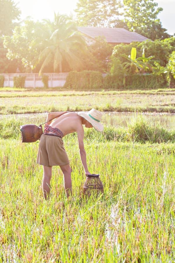 在沼泽的年轻农业学家渔 库存图片
