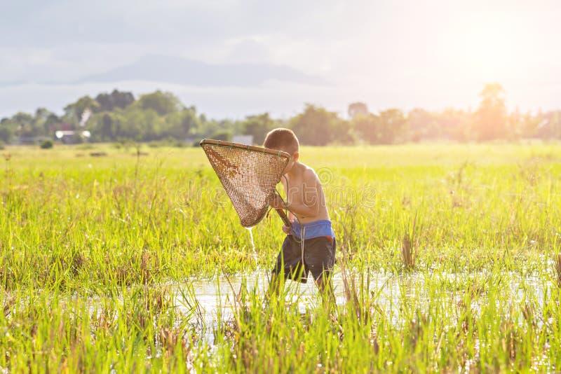在沼泽的年轻农业学家渔 库存照片