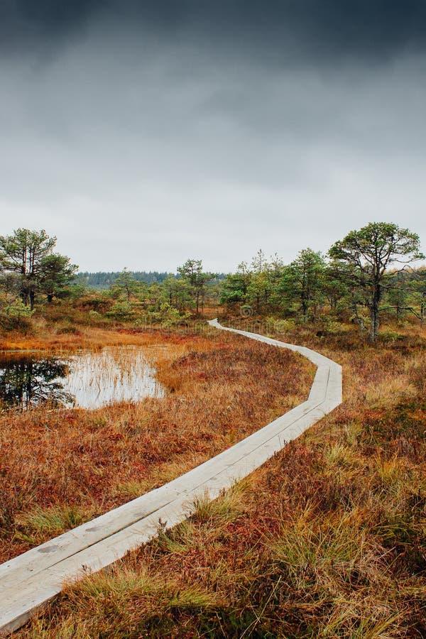 在沼泽Kakerdaja的足迹在爱沙尼亚 免版税库存照片