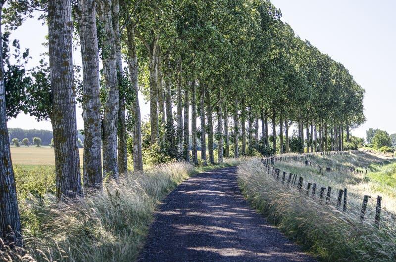 在沿途有树的堤堰的老柏油路 免版税库存图片