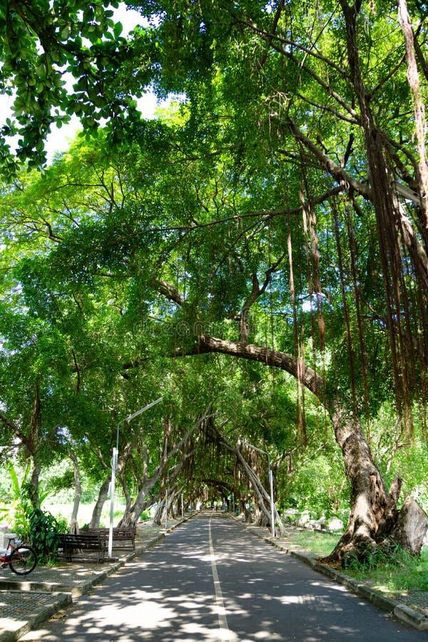 在沿道路的一个森林的巨大的公园散步 免版税库存照片