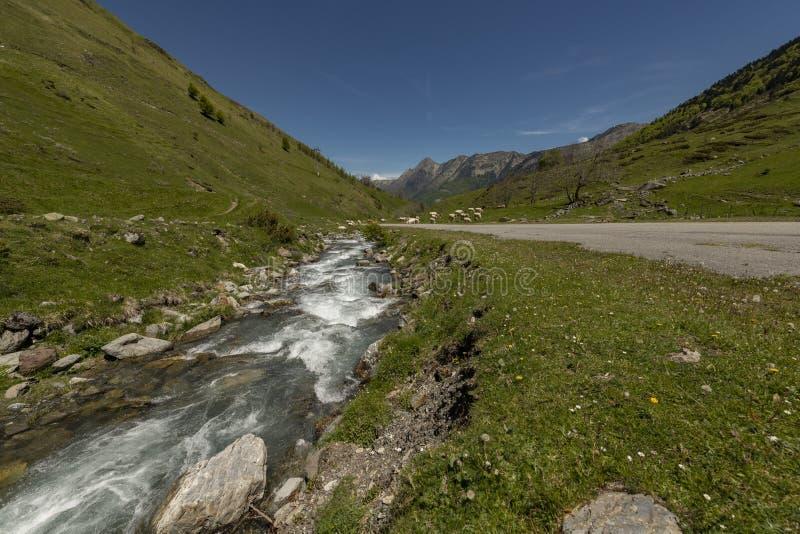 在法国山的熔化的雪引起的小河 免版税库存图片