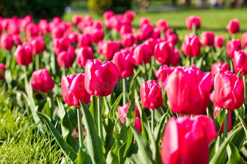 在波士顿共同的公园马萨诸塞的美好的春日 免版税库存照片