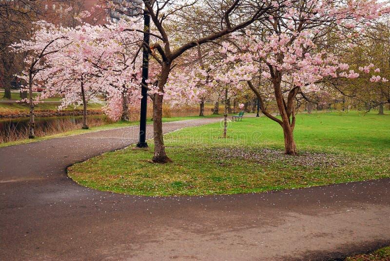 在波士顿广场的春天 免版税库存图片