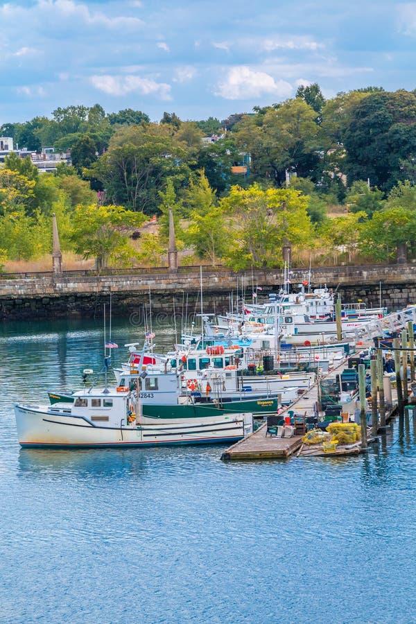 在波士顿附近的渔公猪 库存图片