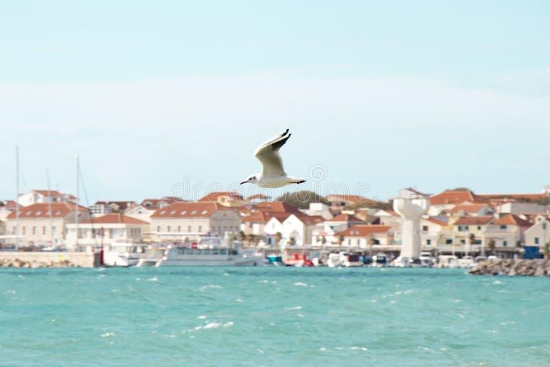 在波浪海上的一次海鸥飞行在沃迪采,克罗地亚 库存照片