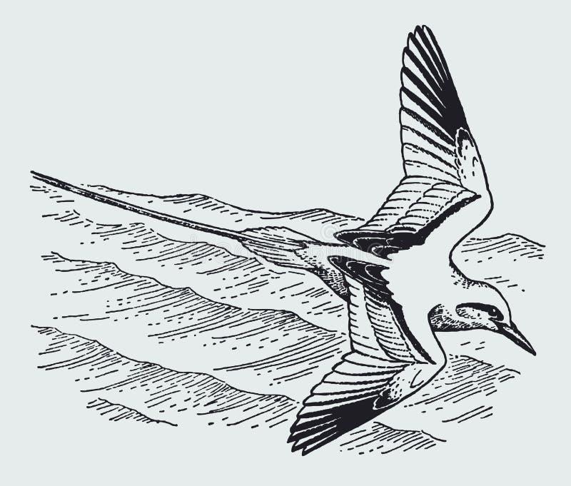 在波浪海的红被盯梢的tropicbird费顿rubricauda飞行 向量例证