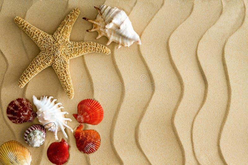 在波浪海滩沙子的海星和海壳 免版税图库摄影