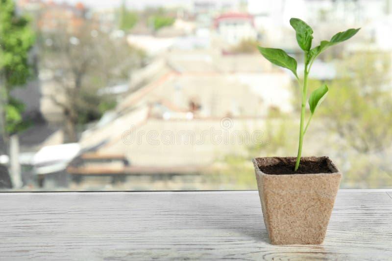 在泥煤罐的菜幼木在窗口基石 库存照片
