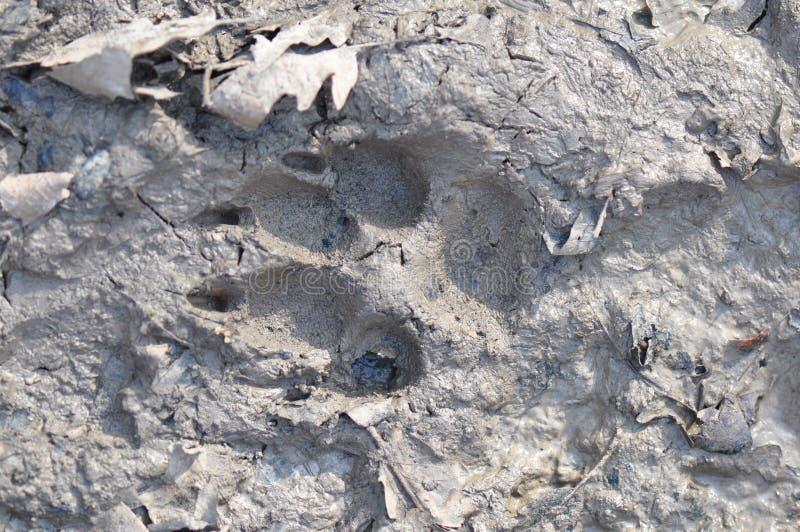 在泥的爪子标记 图库摄影