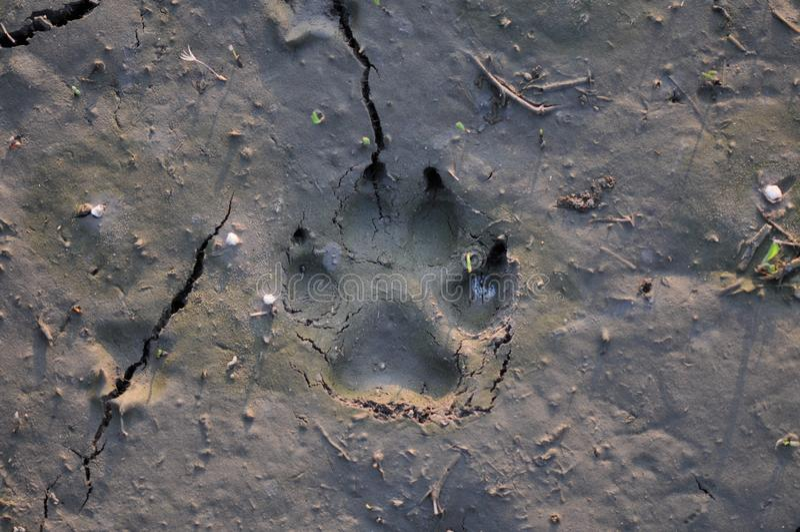 在泥的爪子标记 免版税库存图片