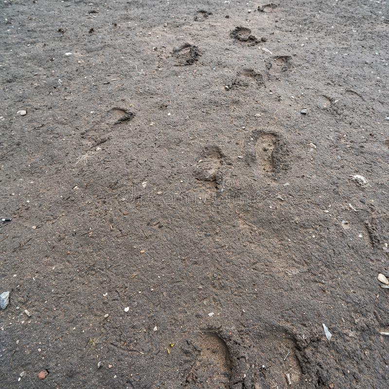在泥的脚印 免版税库存图片