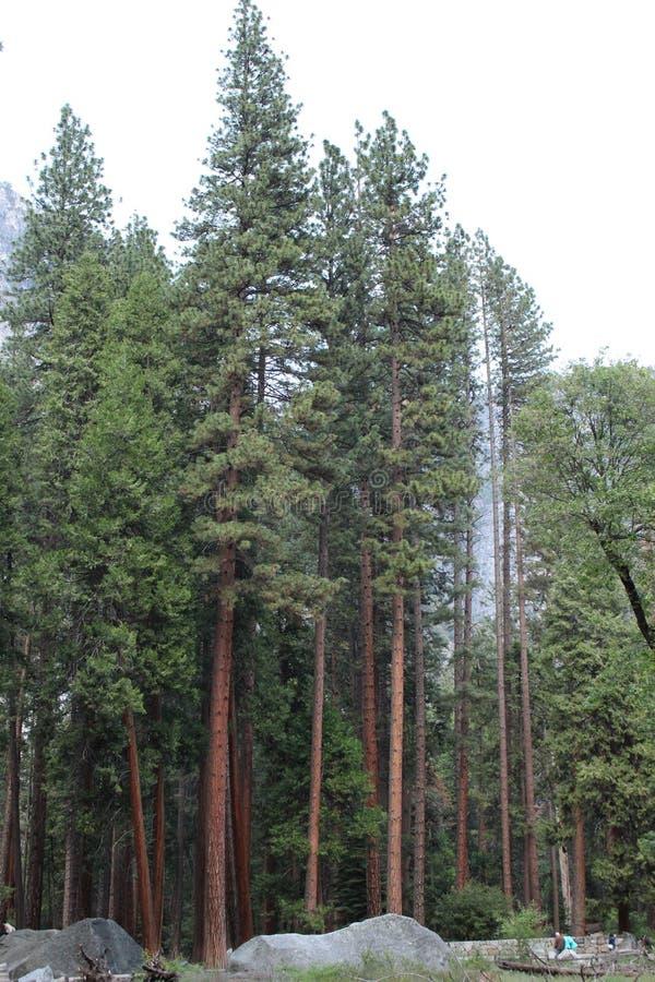 在注意的树 库存照片