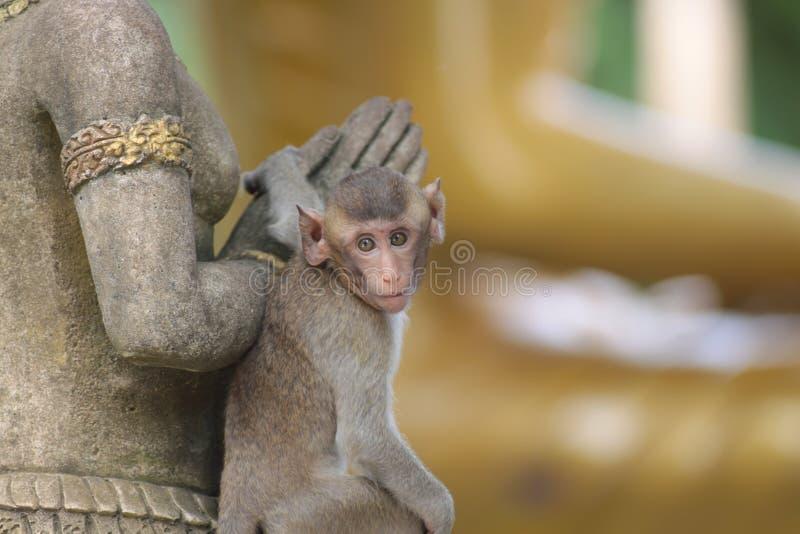 在泰国寺庙的猴子 库存图片