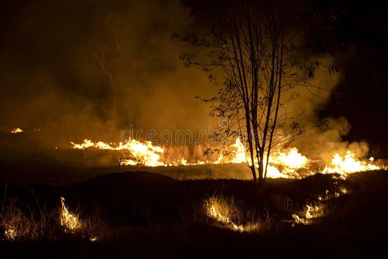 在泰国期间的旱季通常发生的狂放的火 烧造成的火直到尘土、烟和PM2的甘蔗 5?? 免版税库存图片