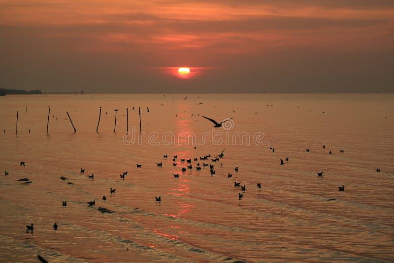 在泰国湾风平浪静的风景日出有许多浮动海鸥的 库存图片