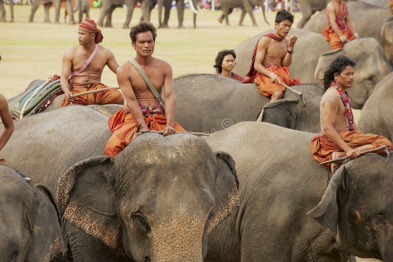 在泰国苏林的大象节上,骑象人参加一年一度的大象展 库存图片